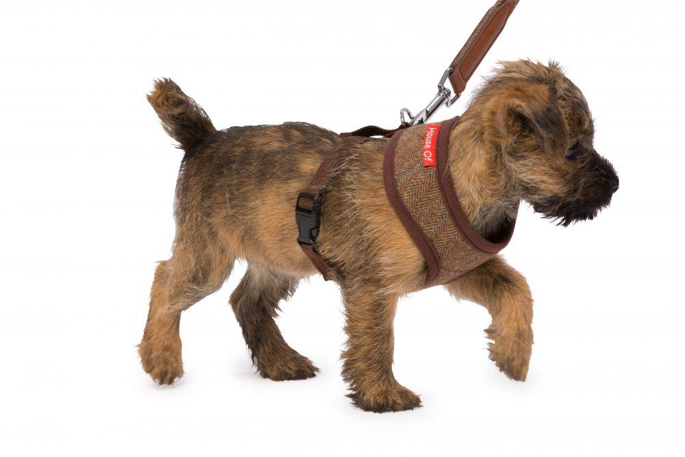 HP905B Dog 2